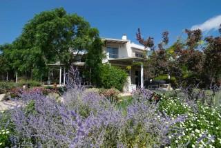 gallery ammouda villas garden view-04