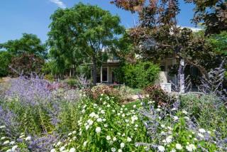 gallery ammouda villas garden view-11